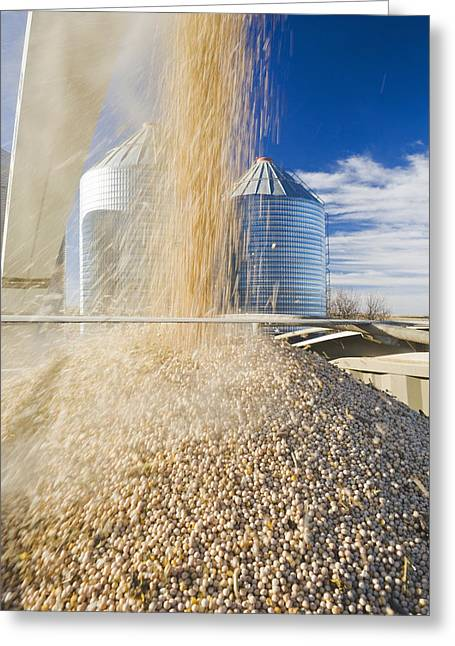 Food Delivery Greeting Cards - Field Peas Being Augered Into A Farm Greeting Card by Dave Reede