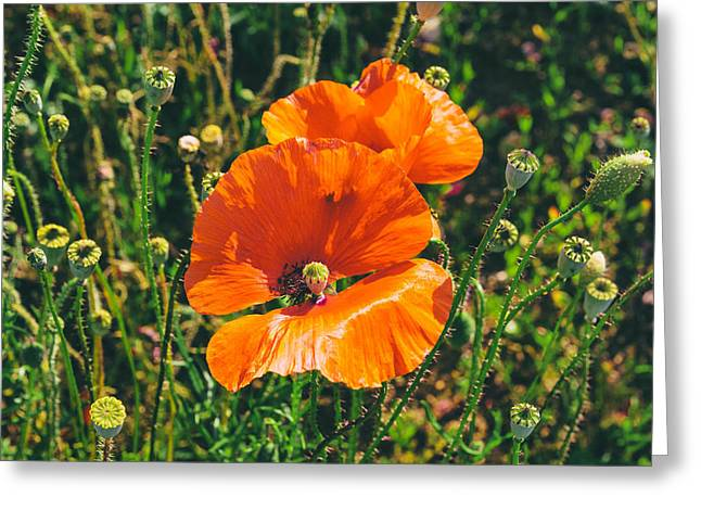 A Sunny Morning Greeting Cards - Field Poppies Greeting Card by Nomad Art And  Design