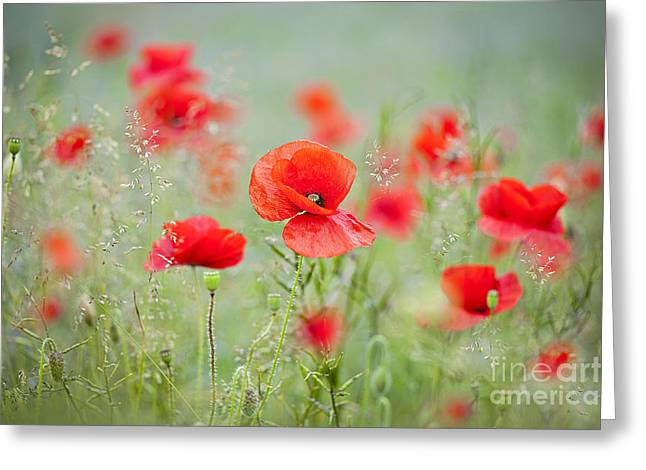 Field Poppies Greeting Card by Jacky Parker