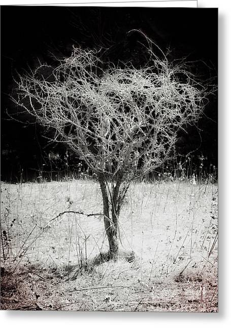 Creative Manipulation Greeting Cards - Field Tree Of Surreality Greeting Card by Miss Dawn