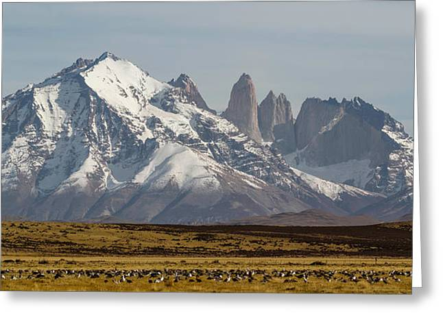 Mountain Greeting Cards - Field With Snowcapped Mountains Greeting Card by Panoramic Images