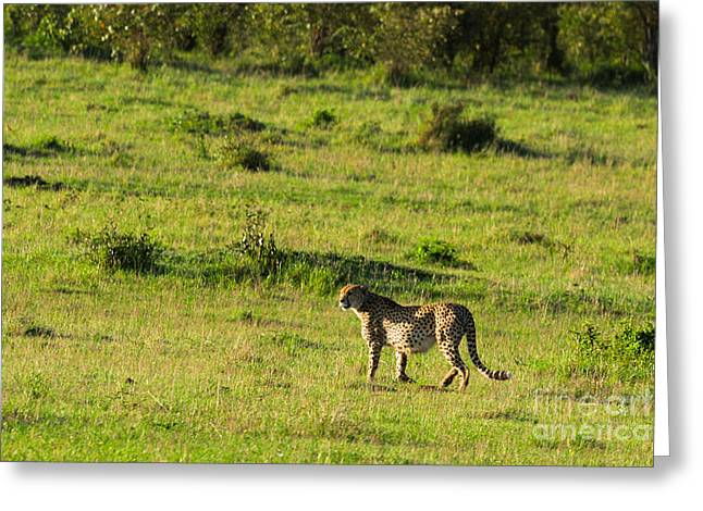 Out Of Africa Greeting Cards - Field Work Greeting Card by Syed Aqueel