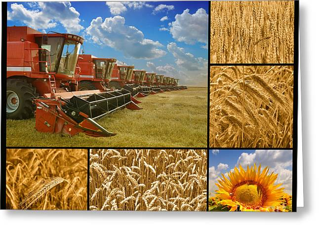 Folk Pyrography Greeting Cards - Fields and Grain Collage Greeting Card by Boon Mee