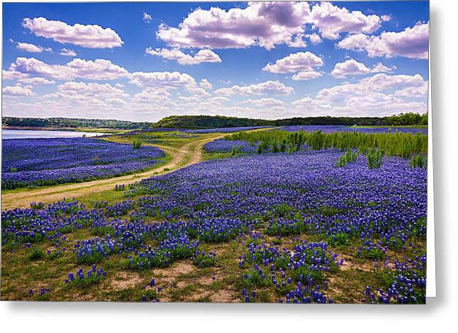 Bluebonnet Landscape Greeting Cards - Fields of Blue Greeting Card by Chuck Underwood