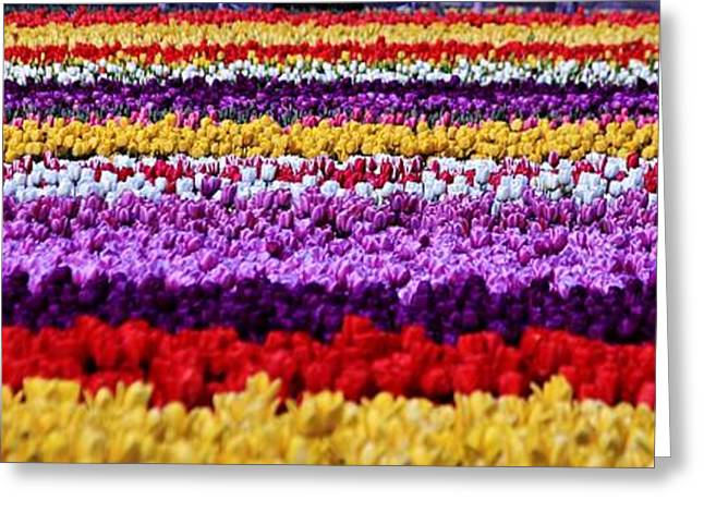 Yeager Greeting Cards - Fields of Flowers Panorama Greeting Card by Benjamin Yeager