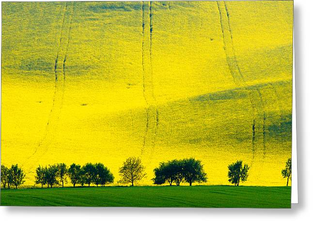Moravia Greeting Cards - Fields Of Gold 3 Greeting Card by Marta Grabska-Press