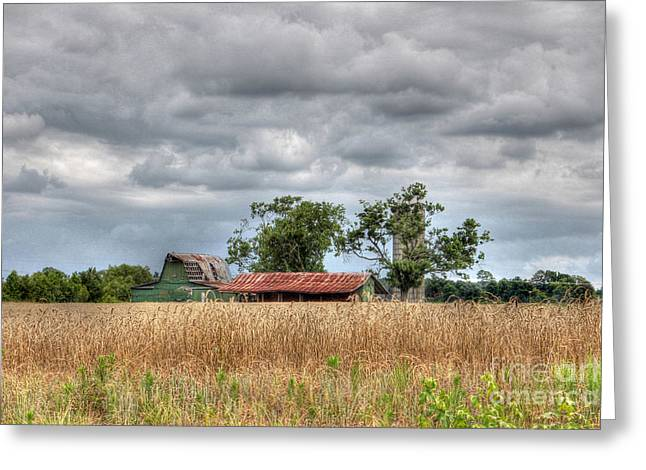 Fields Of Golden Grain Greeting Card by Benanne Stiens