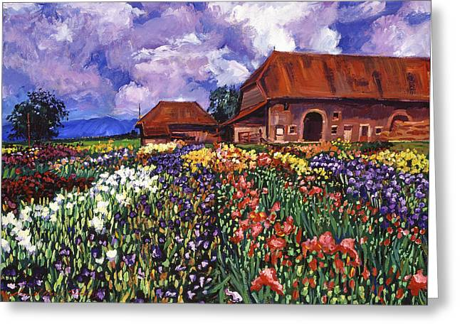 Purple Clouds Greeting Cards - Fields Of Iris Greeting Card by David Lloyd Glover