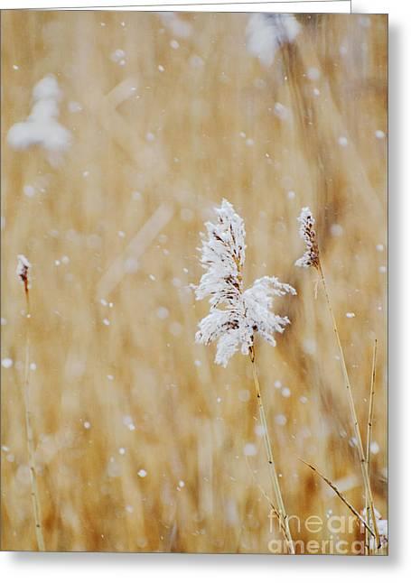 Coastal Decor Digital Greeting Cards - Fields of snow - Landscape in beige and white neutrals Greeting Card by ArtyZen Studios - ArtyZen Home