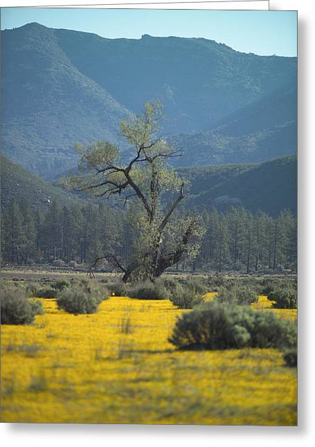 Fields Of Yellow Foxglove Greeting Card by Scott Campbell