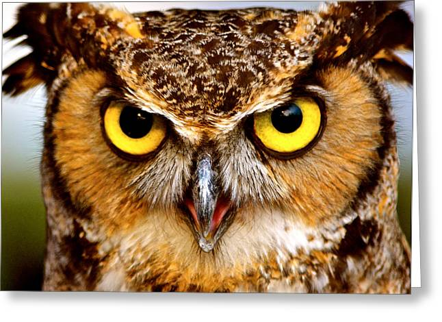 Owl Photography Greeting Cards - Fierce Eyes Greeting Card by Parker Cunningham