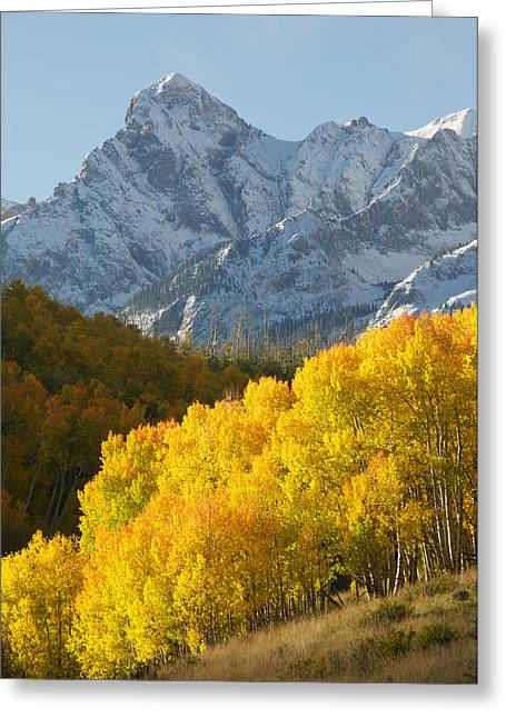 Photos Of Autumn Greeting Cards - Fiery Aspen Landscape Greeting Card by Aaron Spong