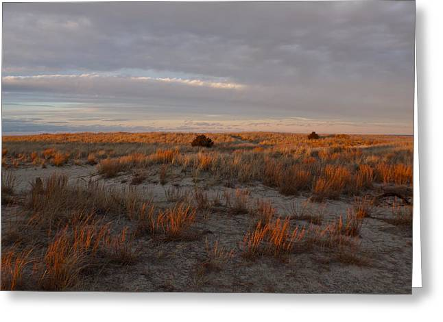 Scusset Beach. Greeting Cards - Fiery Dunes Greeting Card by Amazing Jules