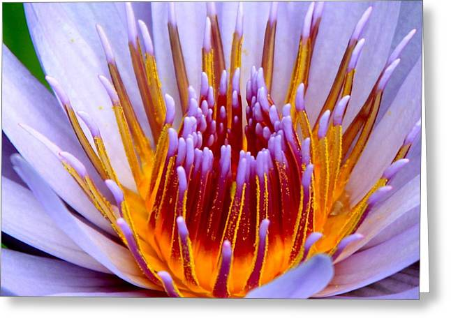 Lotus Lily Greeting Cards - Fiery Eloquence Greeting Card by Karon Melillo DeVega