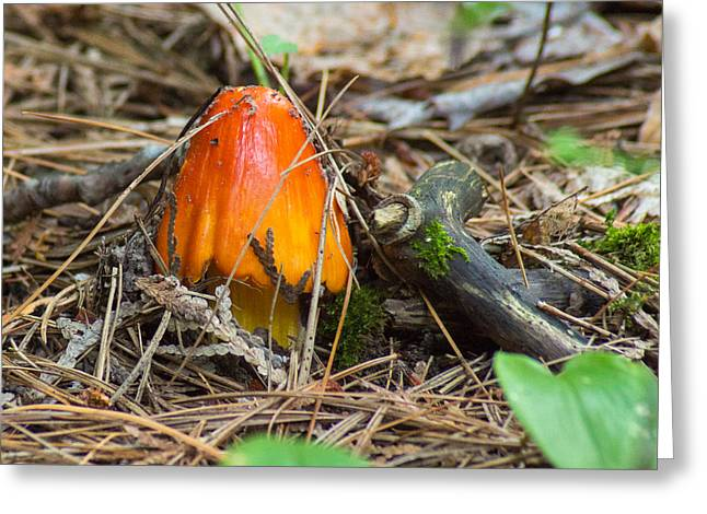 Forest Floor Greeting Cards - Fiery Fungi Greeting Card by Bill Pevlor