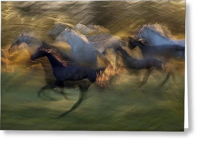 Fiery Gallop Greeting Card by Milan Malovrh