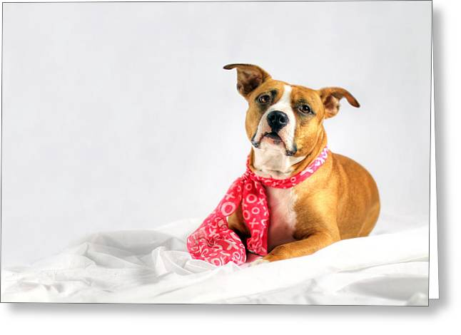 Doggies Greeting Cards - Fifty Shades of Pink Greeting Card by Shelley Neff