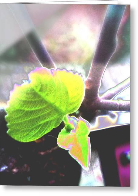 Figs Digital Art Greeting Cards - Fig in the Window Greeting Card by Su Zan