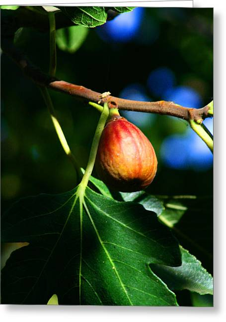 Figs Digital Art Greeting Cards - Fig Ready 4 Jam Greeting Card by Joseph Coulombe