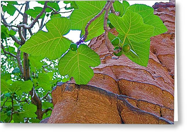 Figs Digital Art Greeting Cards - Fig Tree in Gorge Leading to Treasury in Petra-Jordan Greeting Card by Ruth Hager