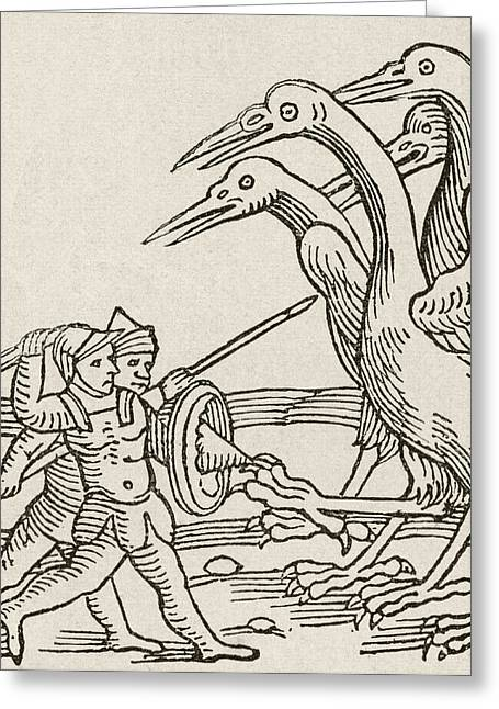 Dwarf Greeting Cards - Fight Between Pygmies And Cranes. A Story From Greek Mythology.  From The Strand Magazine Published Greeting Card by Bridgeman Images