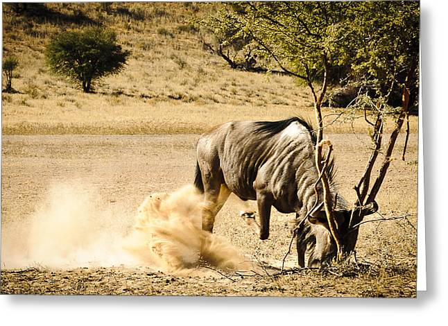 Grapple Greeting Cards - Fight the bush Greeting Card by Andy-Kim Moeller