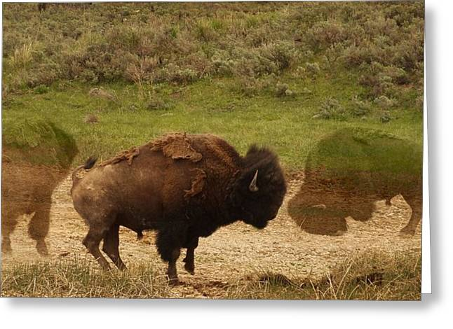 Buffalo Mixed Media Greeting Cards - Fighting Buffalo Greeting Card by Dan Sproul
