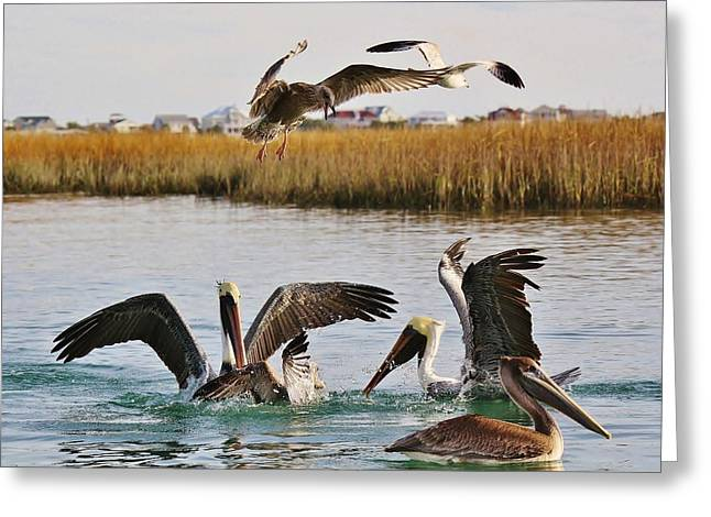 Fighting For A Fish Dinner Greeting Card by Paulette Thomas