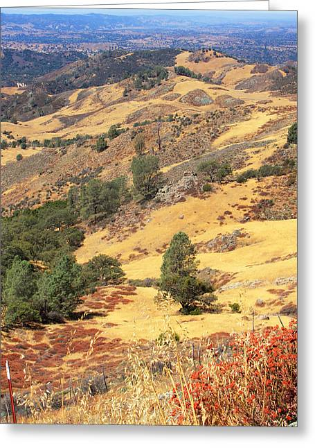 Santa Barbara Art Greeting Cards - Figueroa Mountain Greeting Card by Art Block Collections