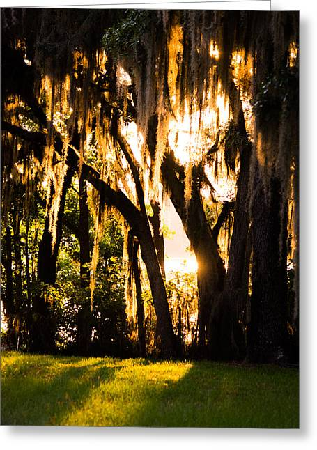 Peaceful Tree At Sunset Greeting Cards - Filtering Light Greeting Card by Parker Cunningham
