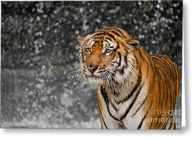 Princess Grace Greeting Cards - Final Drops Greeting Card by Ashley Vincent