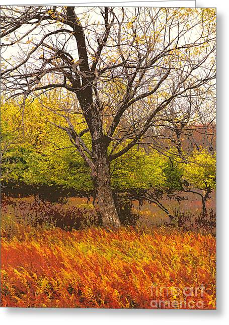 Paint Photograph Greeting Cards - Final Fall - Dolly Sods West Virginia Greeting Card by Dan Carmichael