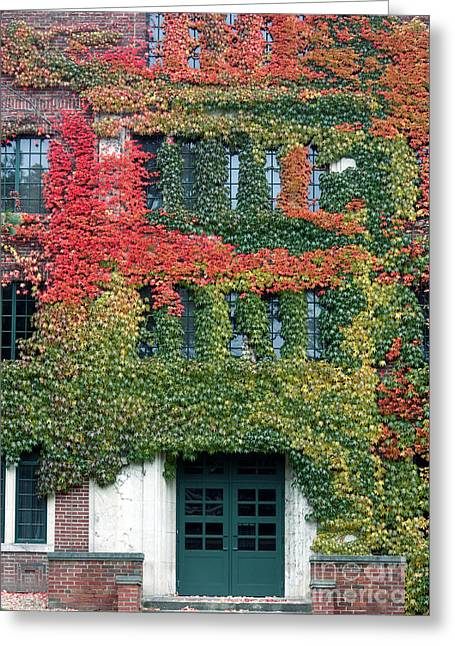 Student Housing Greeting Cards - Final Farewell WMU Dorm in Autumn Ivy Greeting Card by Penny Hunt