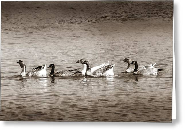 Water Fowl Greeting Cards - Finally In A Row Greeting Card by Donna Blackhall