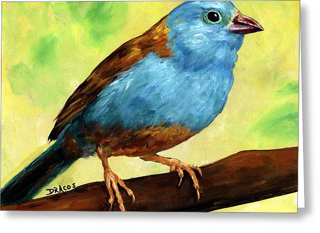 Cordoned Greeting Cards - Finch Cordon Bleu Greeting Card by Dottie Dracos