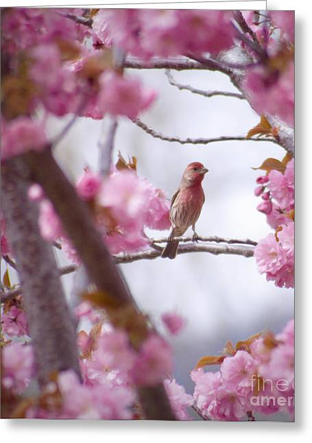 Wild Orchards Greeting Cards - Finch Frame Greeting Card by Andrea Goodrich