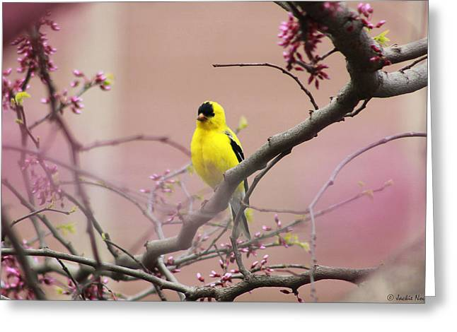 Finch In A Red Bud Greeting Card by Jackie Novak