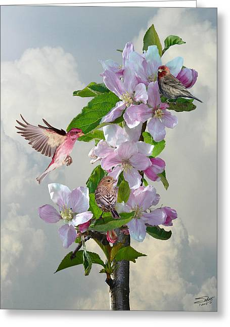Finches In Blooming Apple Tree Greeting Card by Matthew Schwartz
