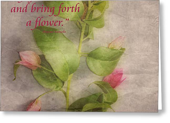 Find the Seed Greeting Card by Cheryl Young