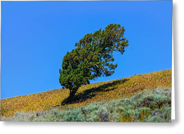 Yellowstone National Park Greeting Cards - Find Your Niche Greeting Card by Greg Norrell
