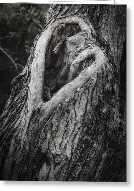 Joan Carroll Greeting Cards - Finding Love Greeting Card by Joan Carroll