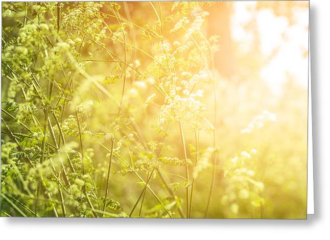 Close Focus Nature Scene Greeting Cards - Fine art dreamy background Greeting Card by Anna Omelchenko