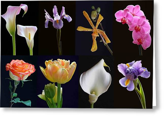 Orchid Artwork Greeting Cards - Fine Art Flower Photography Greeting Card by Juergen Roth