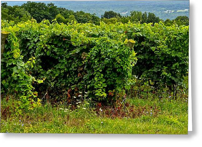 Finger Lakes Greeting Cards - Finger Lakes Vineyard Greeting Card by Frozen in Time Fine Art Photography