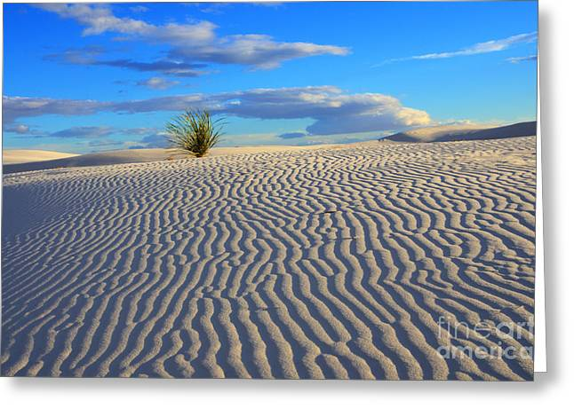 Sand Patterns Greeting Cards - Finger Print Of The Wind New Mexico Greeting Card by Bob Christopher