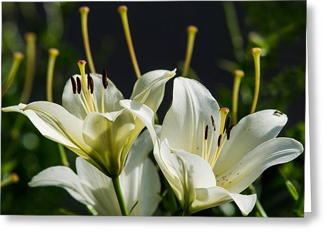Finishing Blossoming - Featured 3 Greeting Card by Alexander Senin