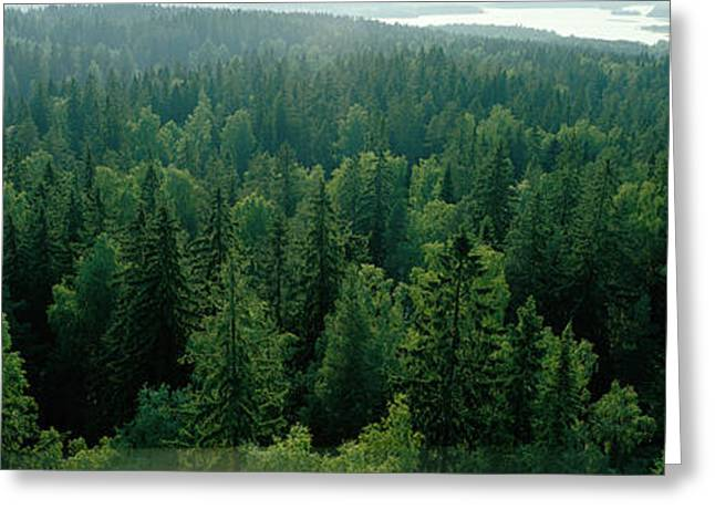 Finland, Aulanko, Scandinavian Forest Greeting Card by Panoramic Images