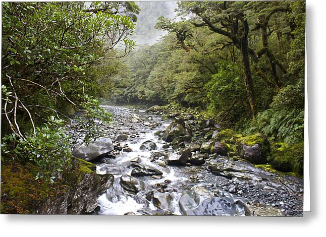 Woodland Scenes Greeting Cards - Fiordland National Park New Zealand Greeting Card by Venetia Featherstone-Witty