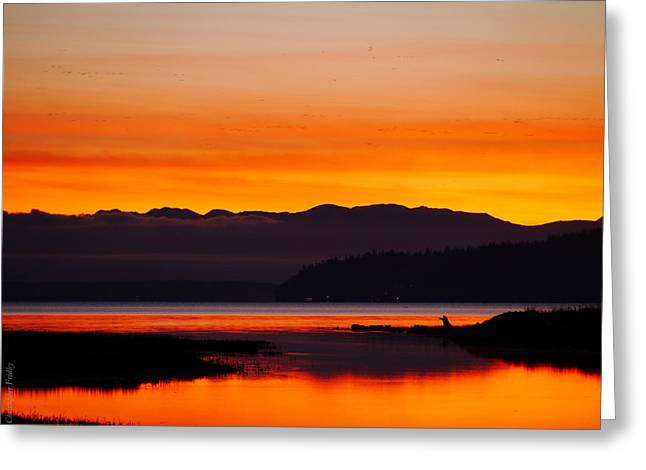 Christopher Fridley Greeting Cards - Fir Island Sunset Greeting Card by Christopher Fridley
