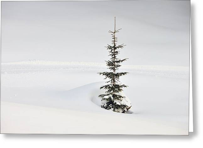 Fir tree and lots of snow in winter Kleinwalsertal Austria Greeting Card by Matthias Hauser
